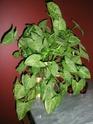 Après les orchidées, les hirondelles, mes plantes d'intérieur.... - Page 4 P7290416