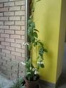 Après les orchidées, les hirondelles, mes plantes d'intérieur.... - Page 4 P8010418
