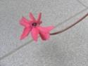Après les orchidées, les hirondelles, mes plantes d'intérieur.... - Page 4 P8010420