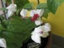 Après les orchidées, les hirondelles, mes plantes d'intérieur.... - Page 4 P8010423