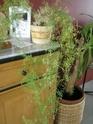 Après les orchidées, les hirondelles, mes plantes d'intérieur.... - Page 4 P8010426