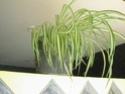 Après les orchidées, les hirondelles, mes plantes d'intérieur.... - Page 4 P8070413