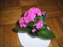 Après les orchidées, les hirondelles, mes plantes d'intérieur.... - Page 4 P8070417