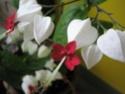 Après les orchidées, les hirondelles, mes plantes d'intérieur.... - Page 4 P8070418