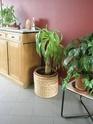 Après les orchidées, les hirondelles, mes plantes d'intérieur.... - Page 4 P8070424