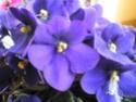 Après les orchidées, les hirondelles, mes plantes d'intérieur.... - Page 4 P8070513