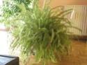 Après les orchidées, les hirondelles, mes plantes d'intérieur.... - Page 4 P8070520