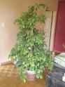 Après les orchidées, les hirondelles, mes plantes d'intérieur.... - Page 4 P8070523
