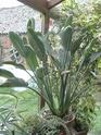 Après les orchidées, les hirondelles, mes plantes d'intérieur.... - Page 4 P8070525
