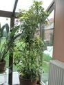 Après les orchidées, les hirondelles, mes plantes d'intérieur.... - Page 4 P8070527