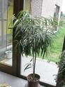 Après les orchidées, les hirondelles, mes plantes d'intérieur.... - Page 4 P8070528