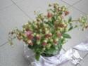 Après les orchidées, les hirondelles, mes plantes d'intérieur.... - Page 4 P8080511
