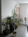 Après les orchidées, les hirondelles, mes plantes d'intérieur.... - Page 4 P8080512