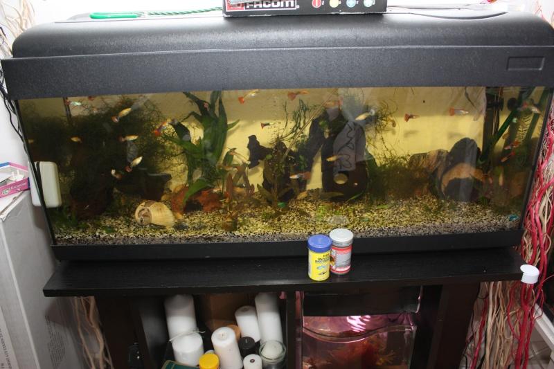 vend tout aquarium et matériel aquariophile 120l_a10
