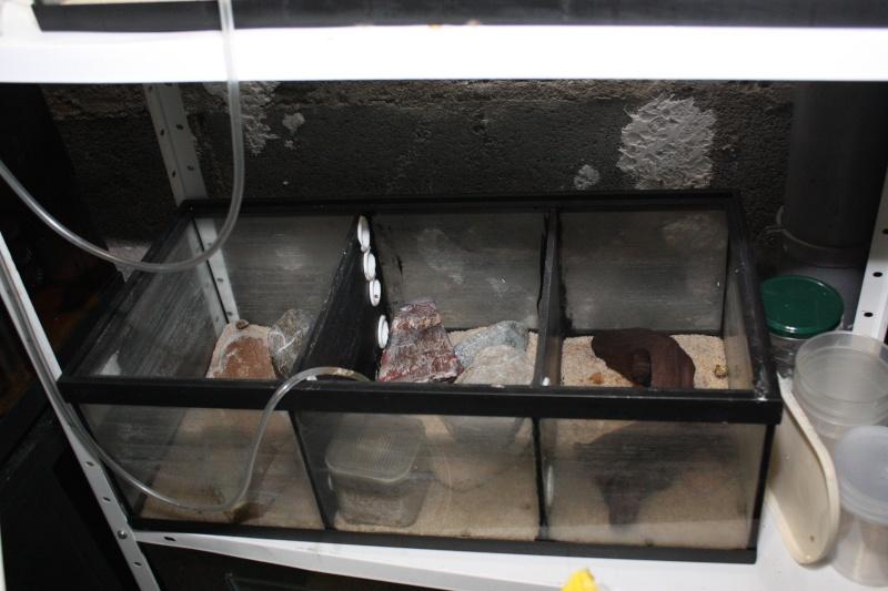 vend tout aquarium et matériel aquariophile 30_20_10