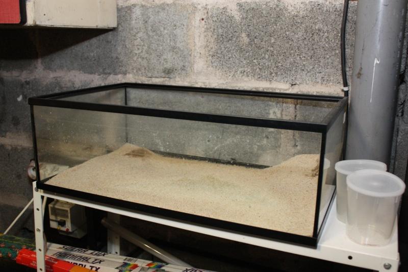 vend tout aquarium et matériel aquariophile 35_20_10