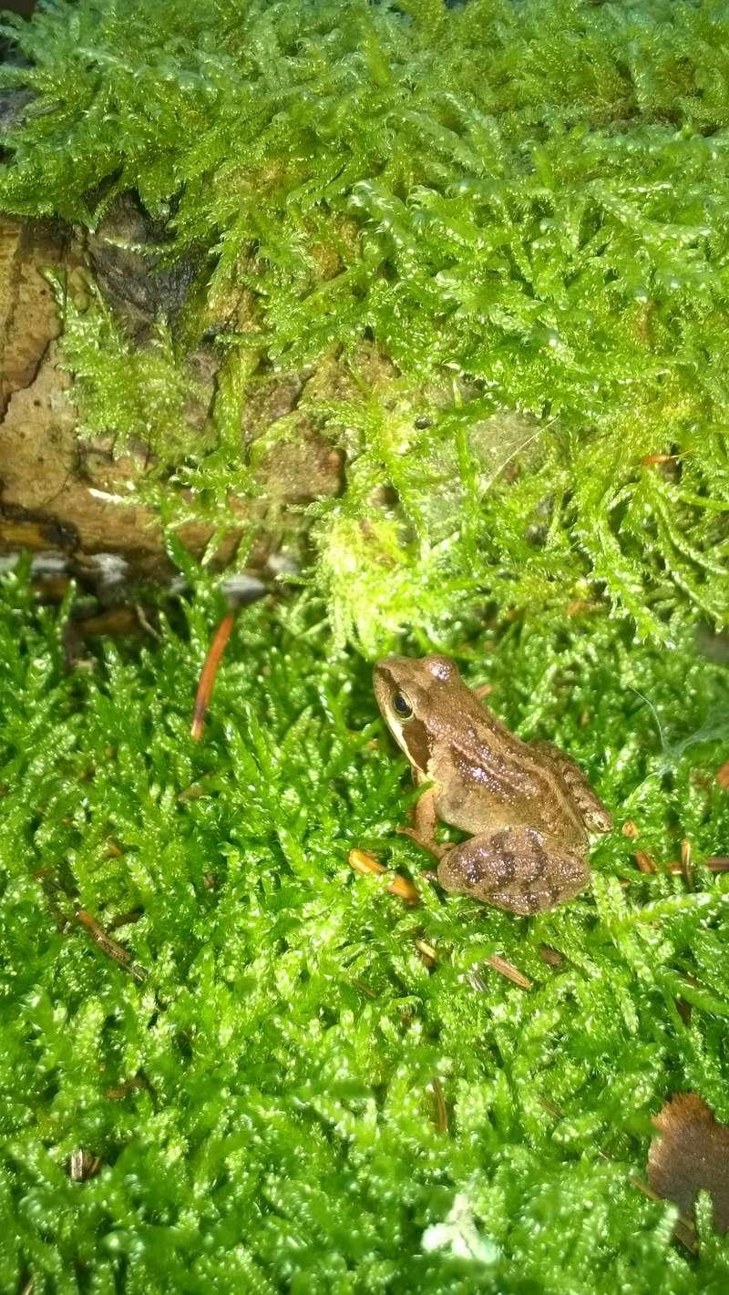 Mini reportage de mon endroit préfèré à champignons. (Dans une montagne d'Alsace) Wp_20145