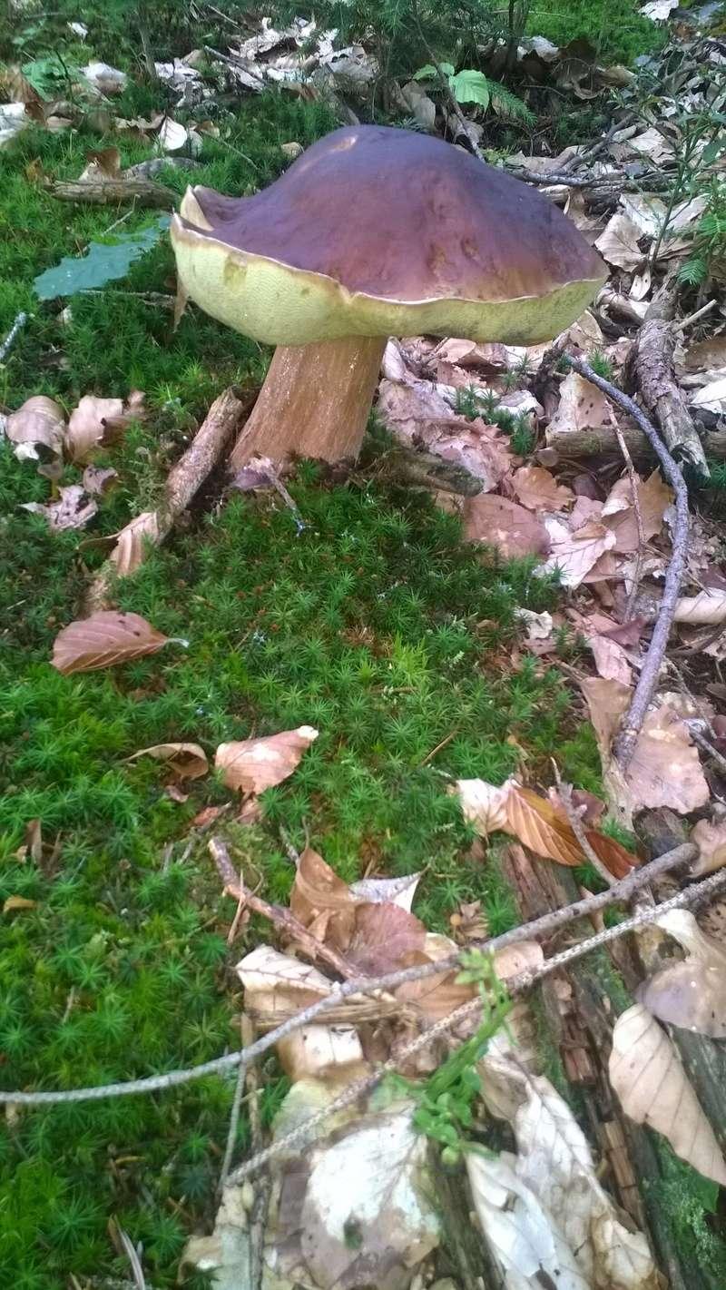Mini reportage de mon endroit préfèré à champignons. (Dans une montagne d'Alsace) Wp_20146