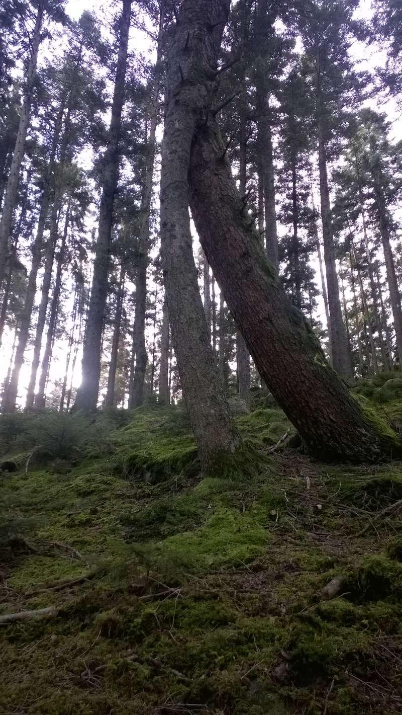Mini reportage de mon endroit préfèré à champignons. (Dans une montagne d'Alsace) Wp_20147