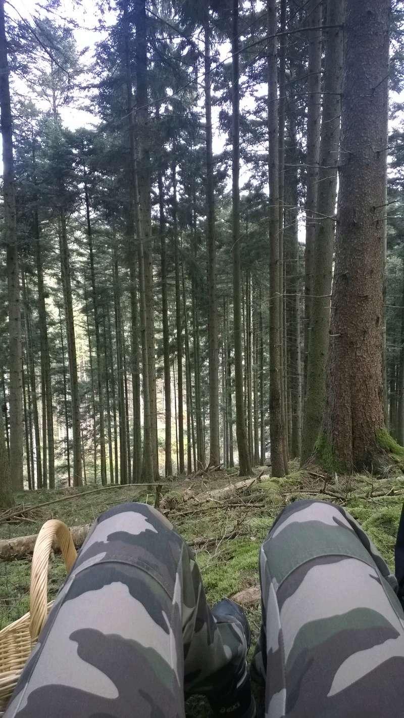 Mini reportage de mon endroit préfèré à champignons. (Dans une montagne d'Alsace) Wp_20148