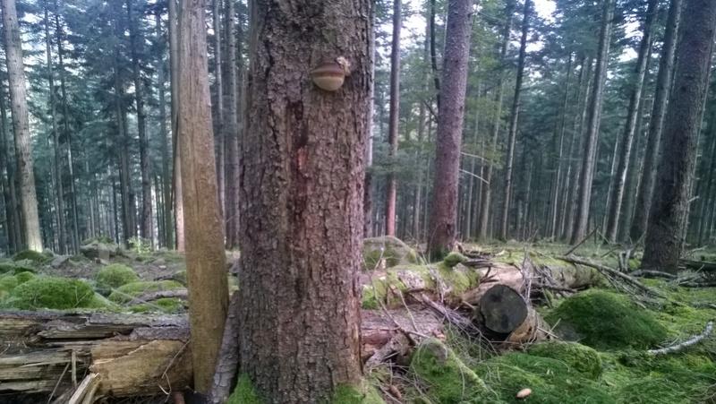 Mini reportage de mon endroit préfèré à champignons. (Dans une montagne d'Alsace) Wp_20149