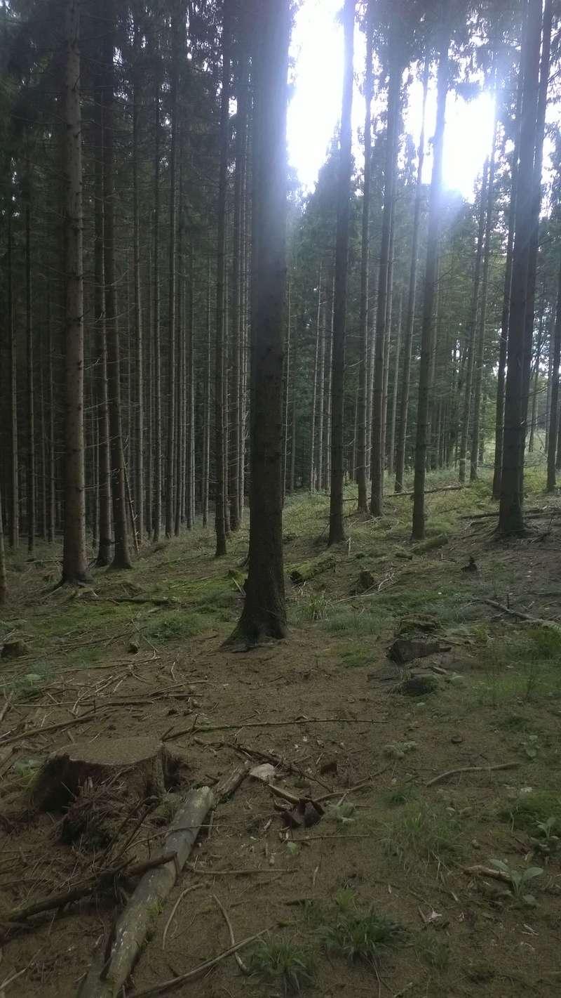 Mini reportage de mon endroit préfèré à champignons. (Dans une montagne d'Alsace) Wp_20155