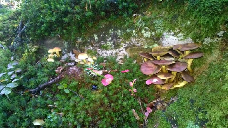 Mini reportage de mon endroit préfèré à champignons. (Dans une montagne d'Alsace) Wp_20156