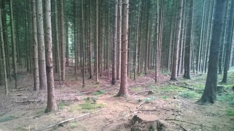 Mini reportage de mon endroit préfèré à champignons. (Dans une montagne d'Alsace) Wp_20158