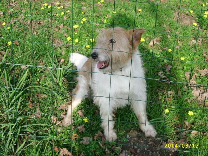 TIMMY, un mignon x Fox d'une douzaine d'années ! - Page 3 Ssa56017