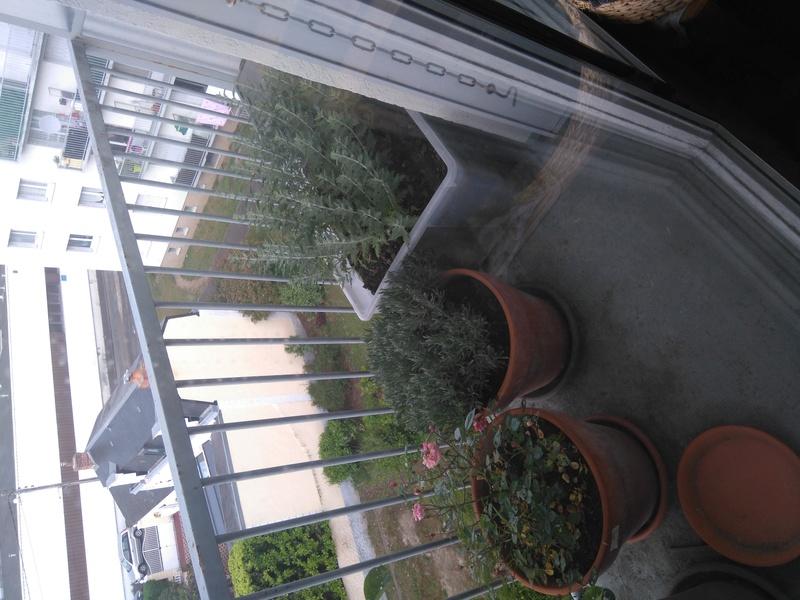 Mon modeste coin de verdure Dsc_0013