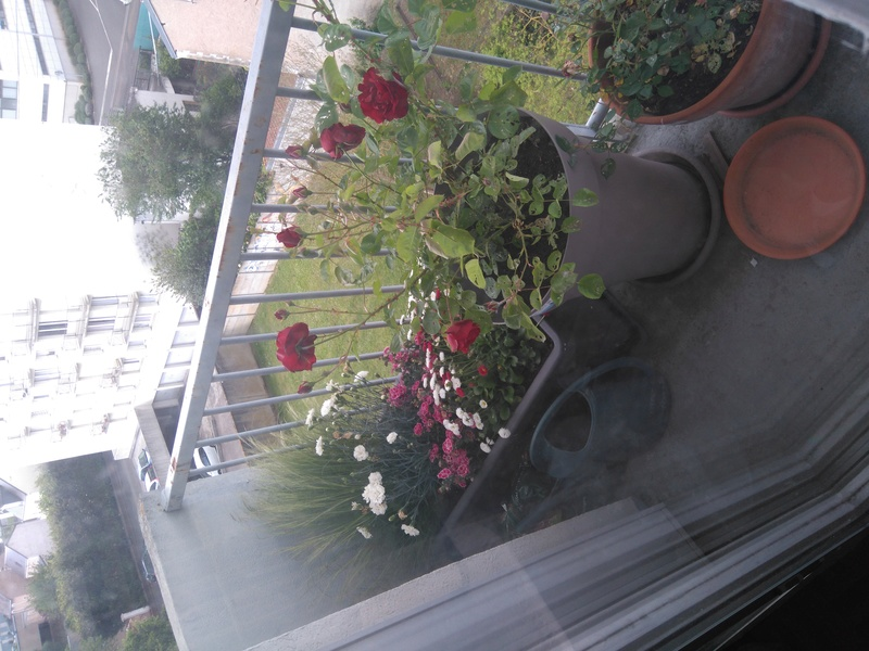 Mon modeste coin de verdure Dsc_0015