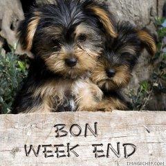 Ici on se dit bonjour  - Page 39 Bon-we10