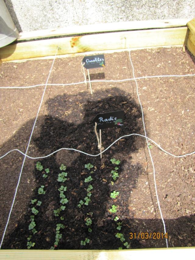 Mon carré potager: vivement la récolte! Img_6223