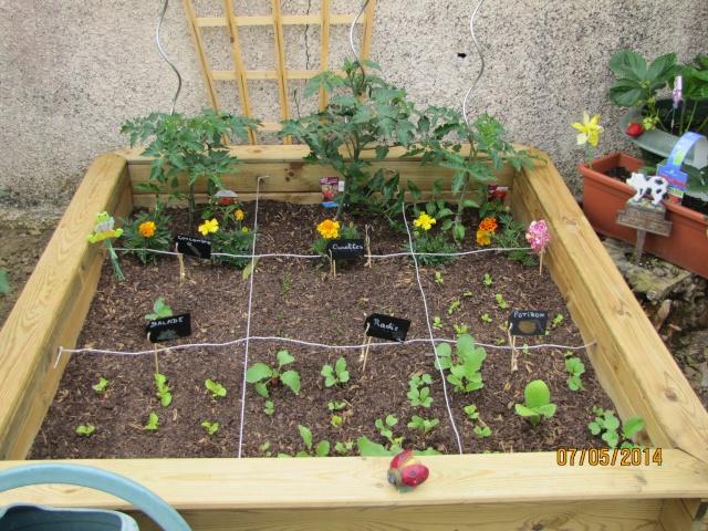 Mon carré potager: vivement la récolte! - Page 2 Img_6430