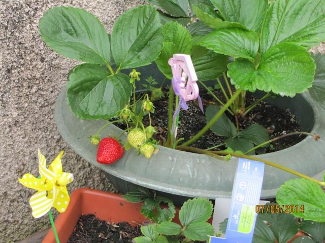 Mon carré potager: vivement la récolte! - Page 2 Img_6431