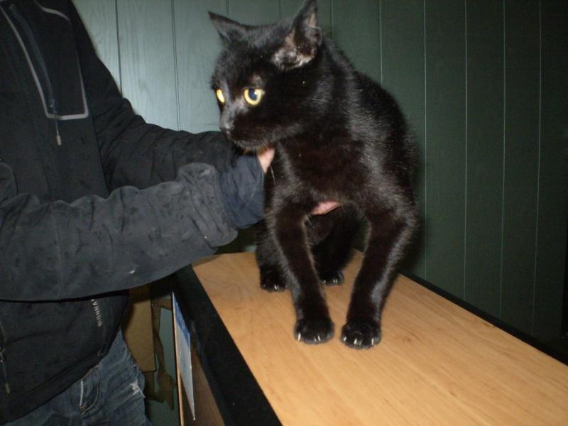 KOVOU  chat  noir né janvier 2013 adopté par JULIE ( 86 ) Pb170010