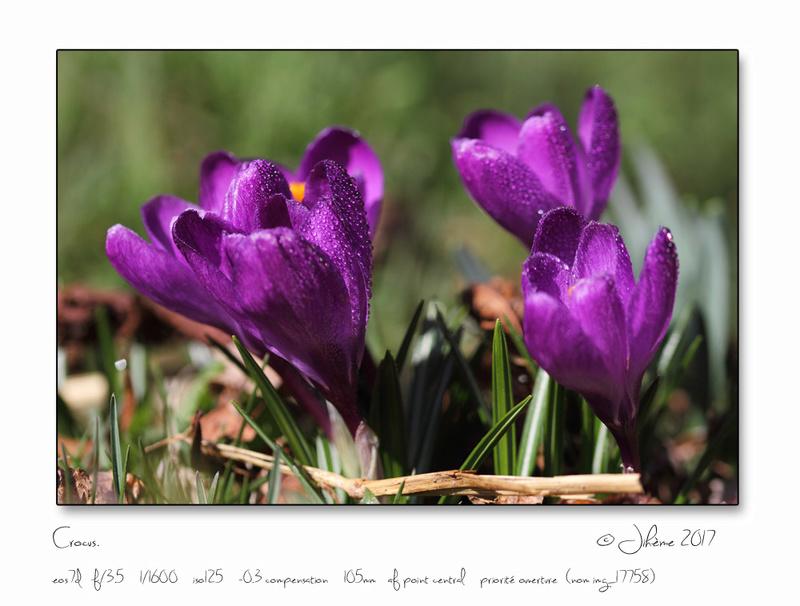 Flore Alpine. Fleurs10