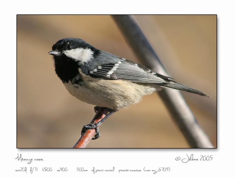Quelques piafs de mon jardin et de mes montagnes: Oiseau14