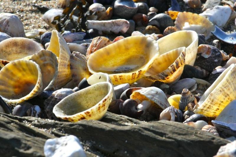 Sur la plage abandonnée.... Img_6911