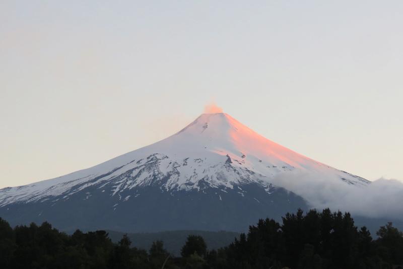 Chili Argentine  Img_1010