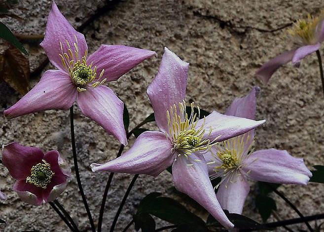 La diagonale des fleurs P4211810