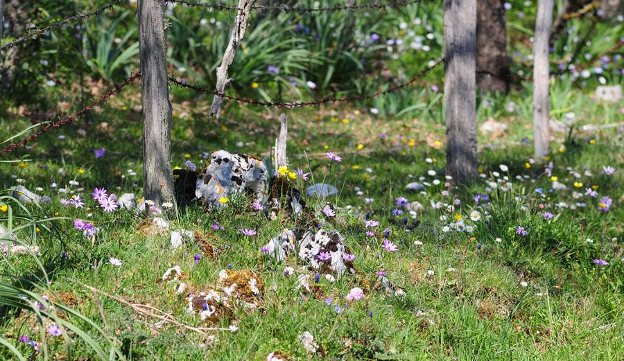 Orchidées et ambiances florales des Pouilles - Page 2 Dsc_0351