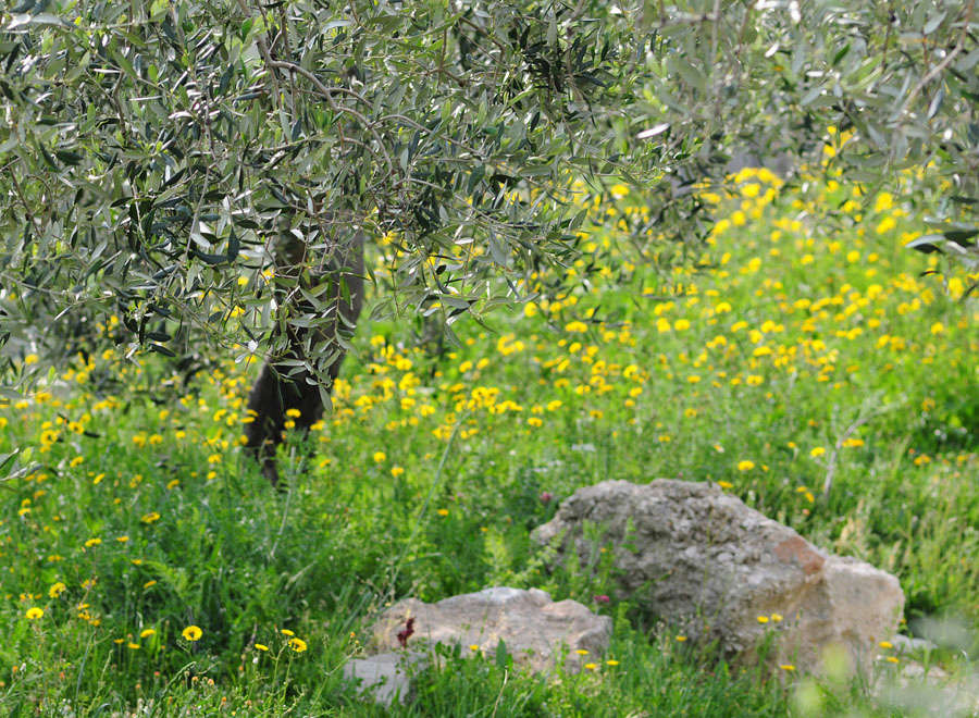 Orchidées et ambiances florales des Pouilles - Page 2 Dsc_0811