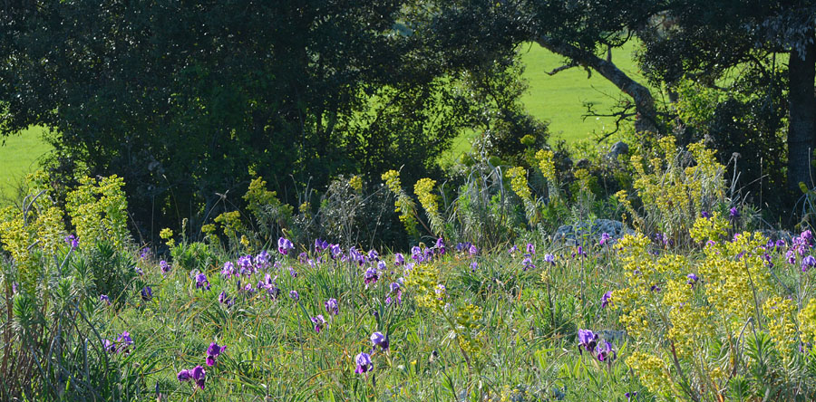 Orchidées et ambiances florales des Pouilles - Page 2 Jlr_0917