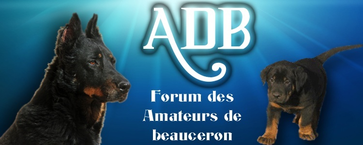 ADB Forum des Amateurs de Beauceron