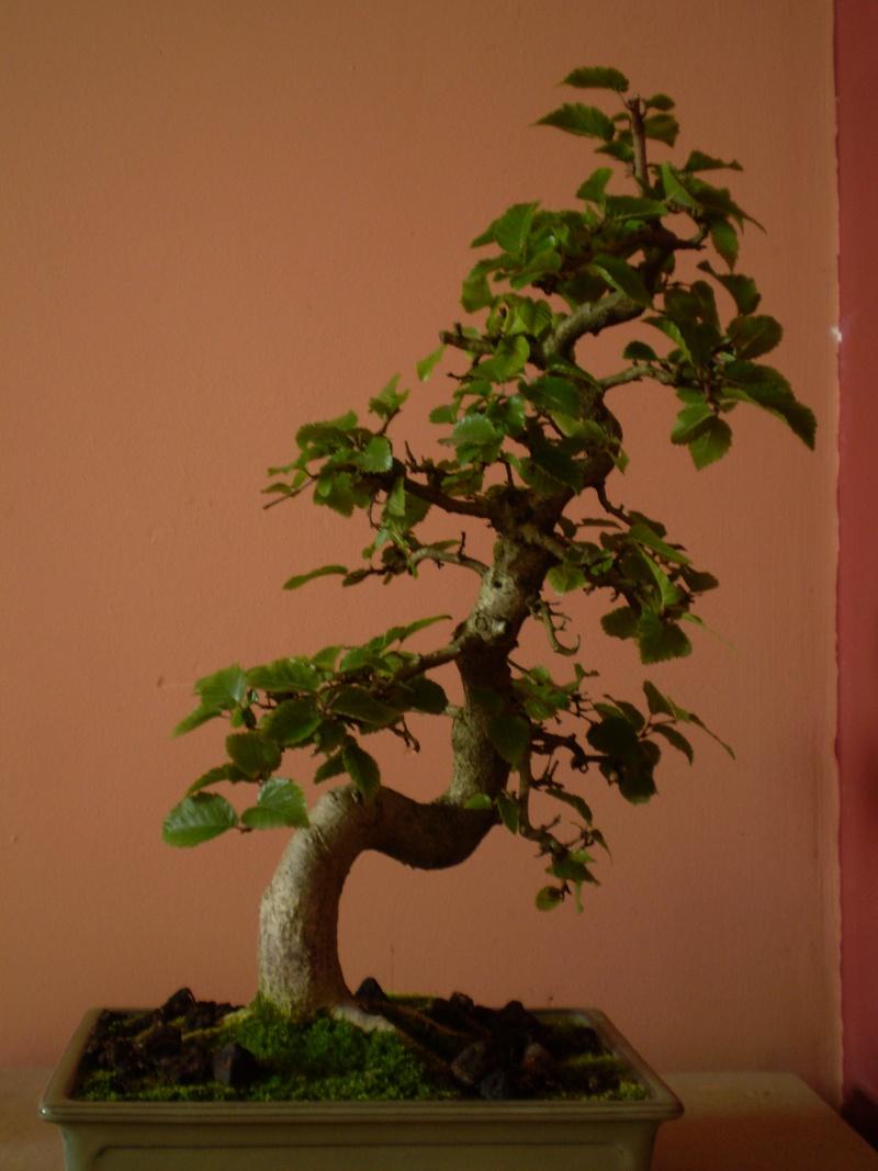 quel arbre acquérir???? P8210010