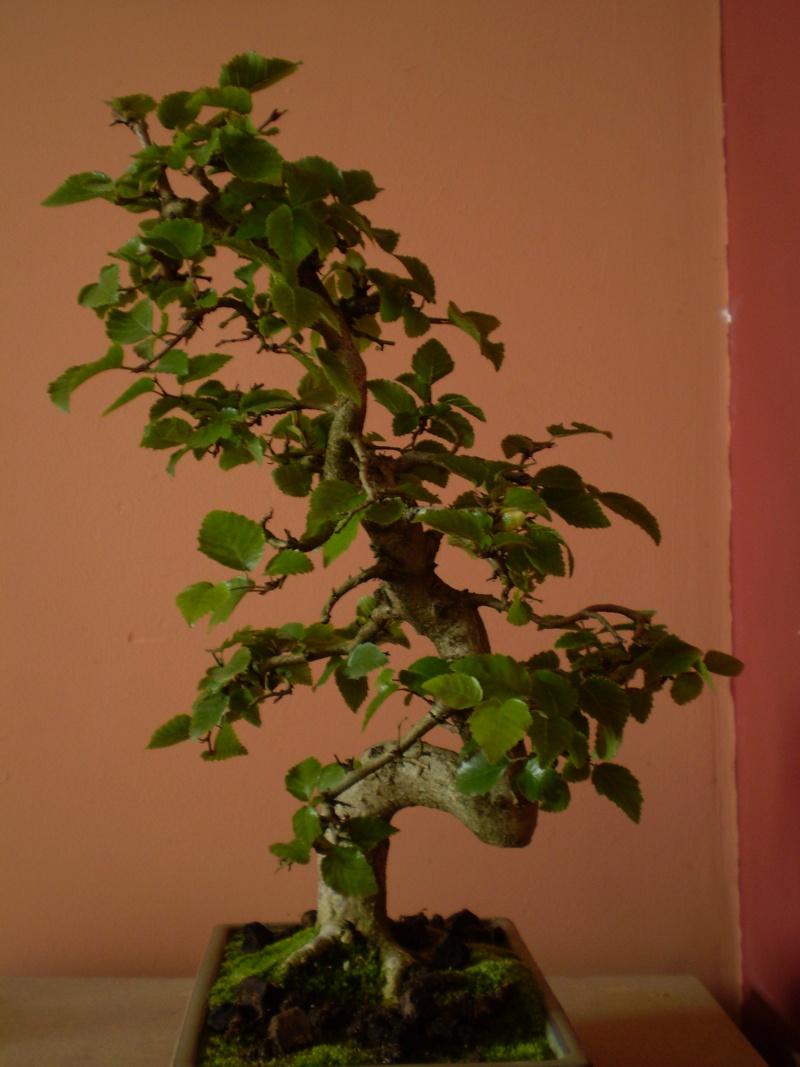 quel arbre acquérir???? P8210011