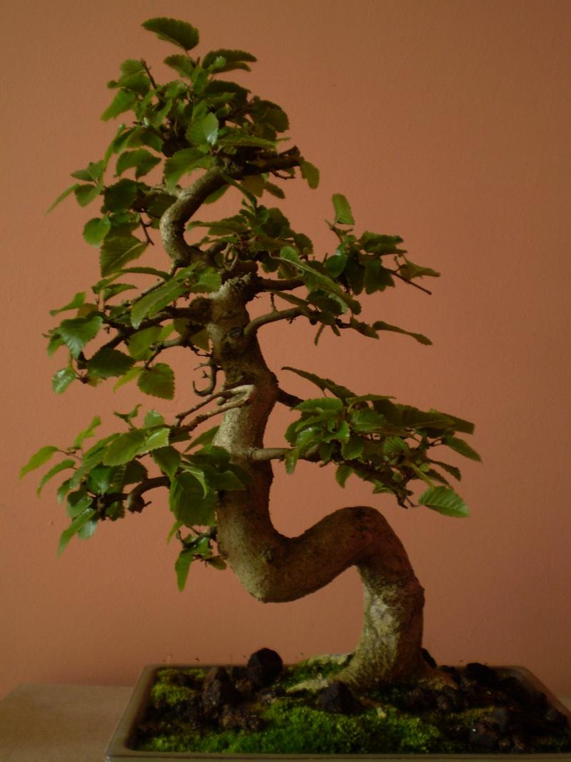 quel arbre acquérir???? P8210012
