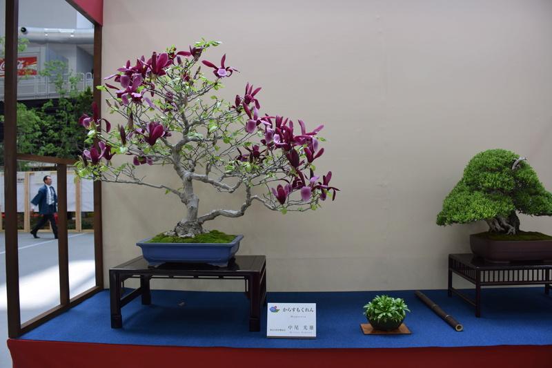 The 8th World Bonsai Convention, SAITAMA CITY - Page 2 Dsc_0610