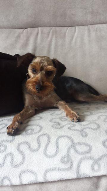 TEDDY petite canaille de 7/10 mois Adopté  Teddy_10